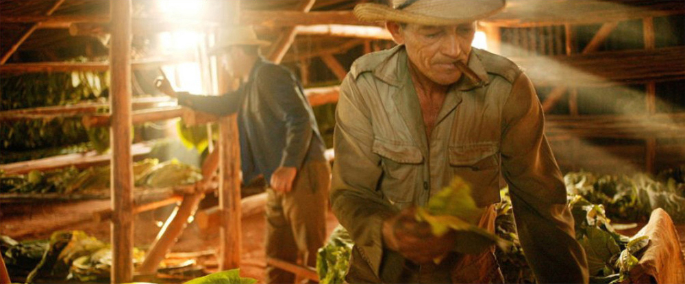 Men Inspecting Tobacco